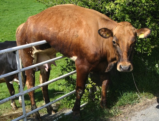 Fence Siiter